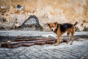 Habana Poor dog