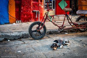Dressed dog at Habana