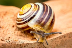 Snail and stripes